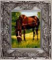 44-cheval-chez-le-voisin-